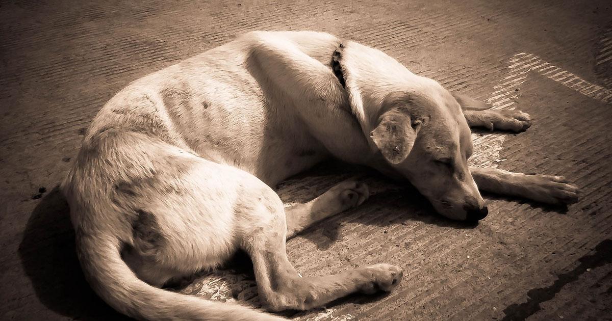 Castração em cães, na sociedade