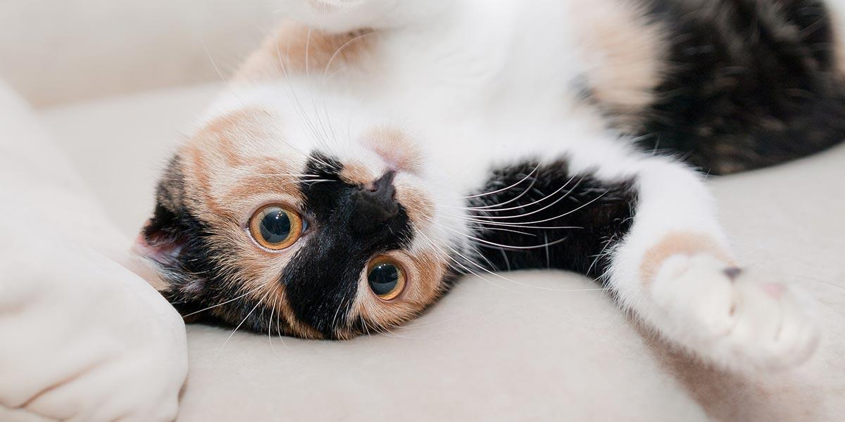 Micose em Gatos