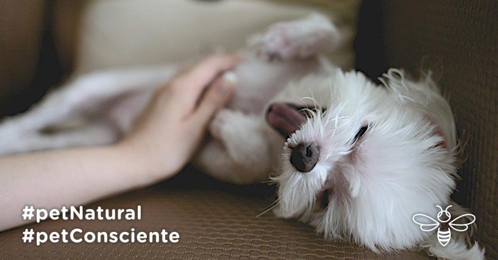 10 dicas na hora de adotar um cachorro