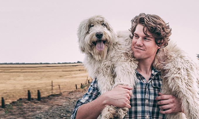 Dicas para adoção de cães