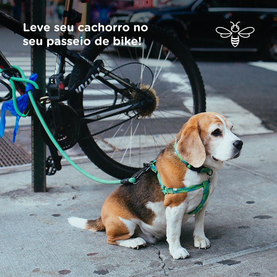 Leve seu cachorro no seu passeio de bike!