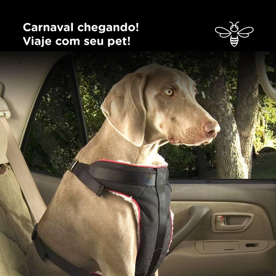 Carnaval chegando! Viaje com seu pet!