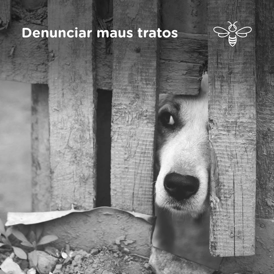 Denuncie maus-tratos ou crueldade contra animais!