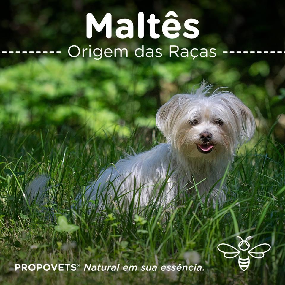 Maltês