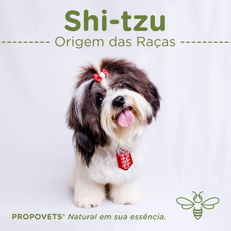 Shi-tzu