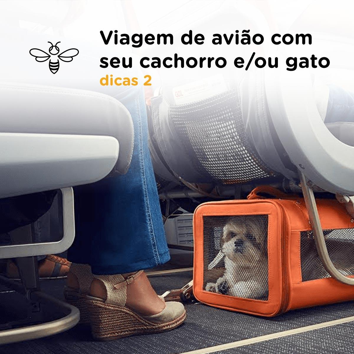 Viagem avião com cachorro e/ou gato