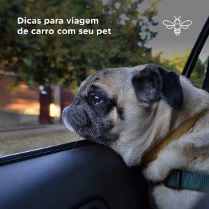 Dicas para viagem de carro com seu cachorro