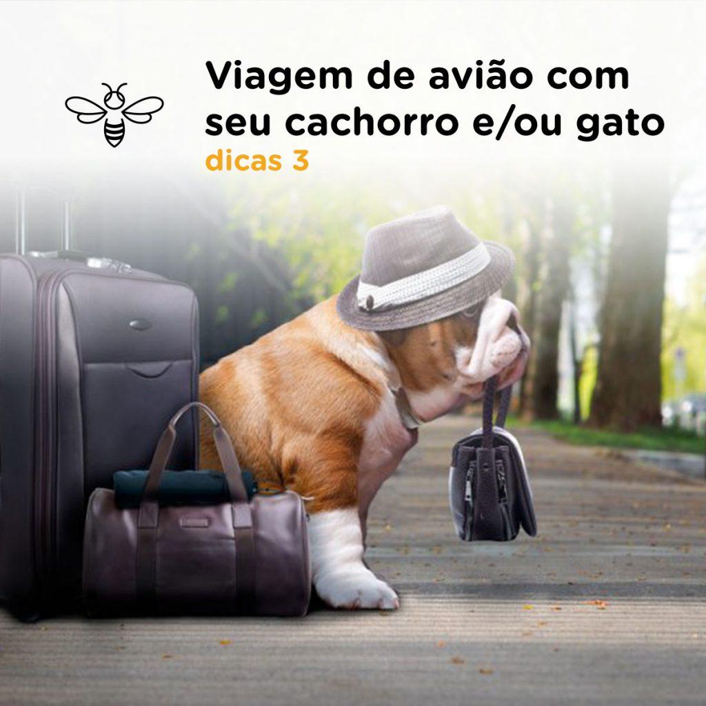 Viagem de avião com seu cachorro e/ou gato | Dica 3