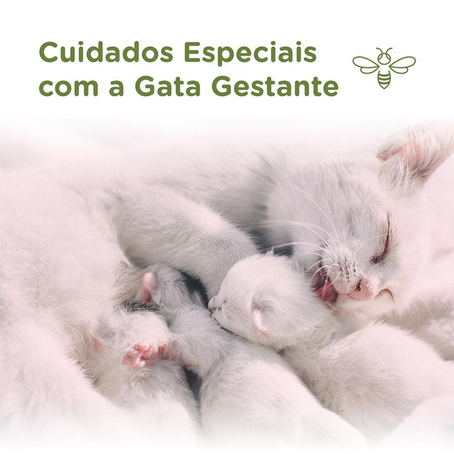 Cuidados especiais com a gata gestante
