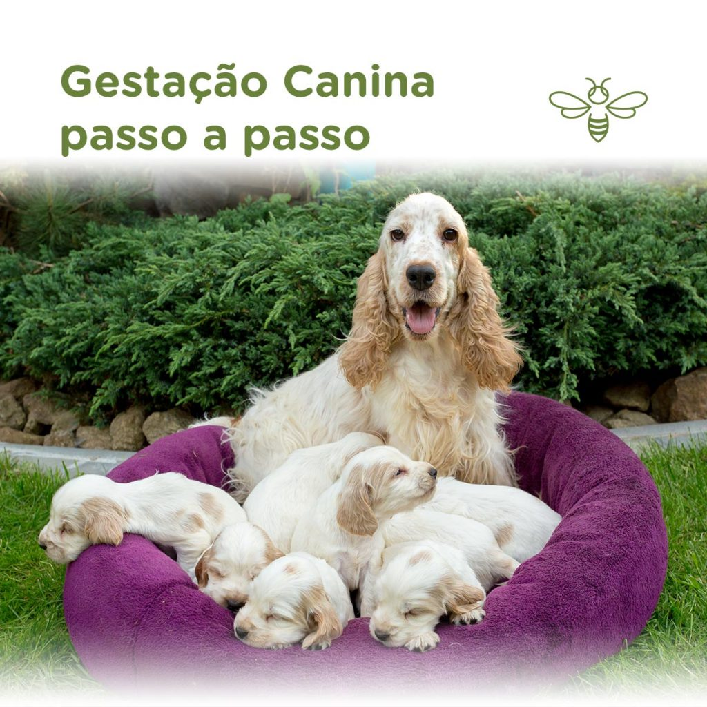 Gestação Canina - passo a passo