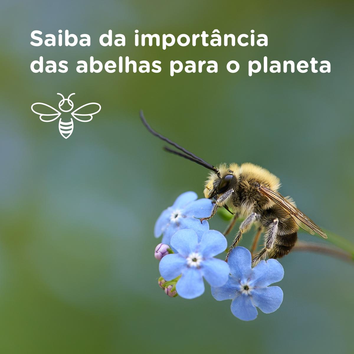 importância das abelhas para o planeta