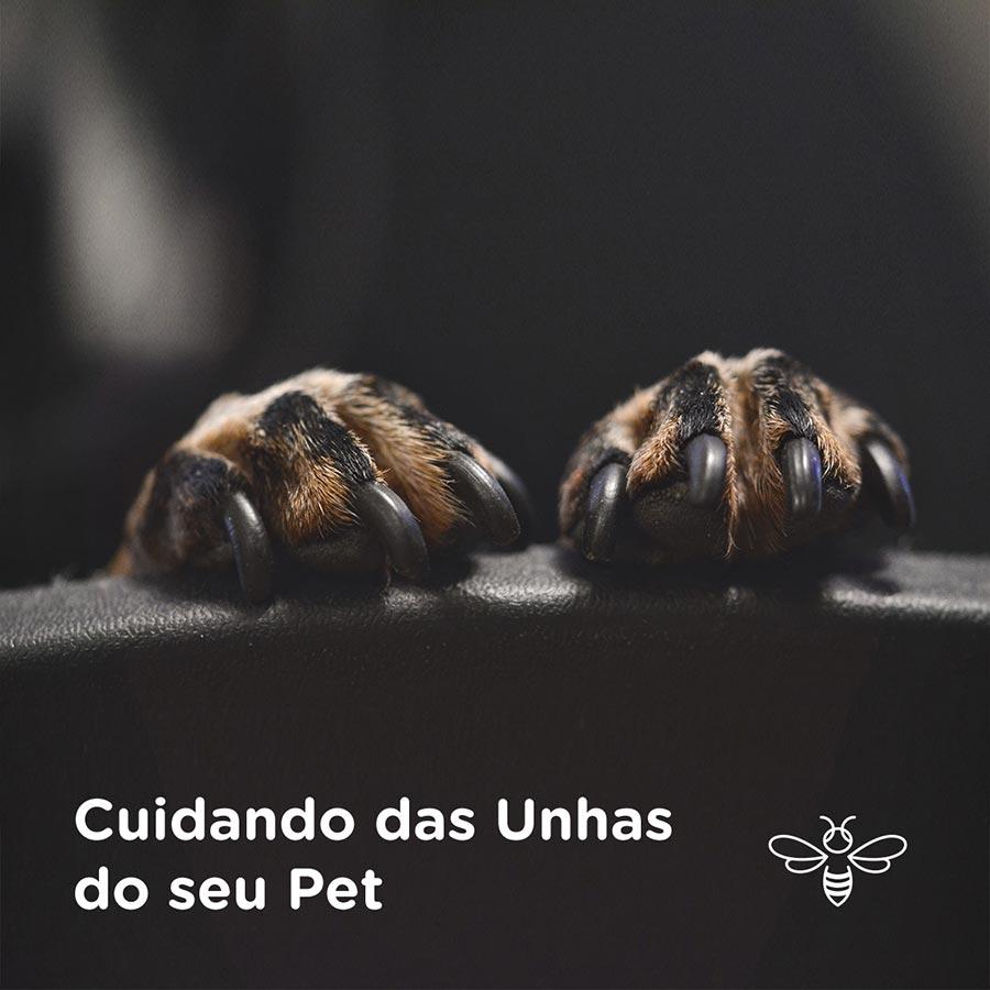 Cuidando das unhas do seu pet