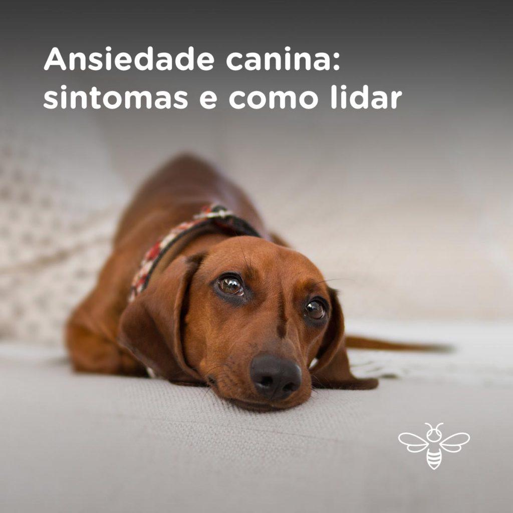 Ansiedade canina