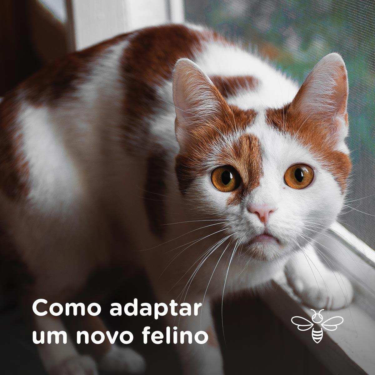 Como adaptar um novo felino