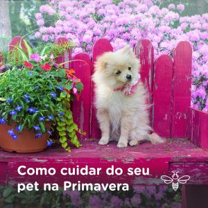 Como cuidar do seu pet na Primavera
