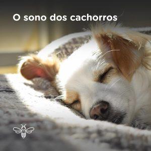 O sono dos cachorros
