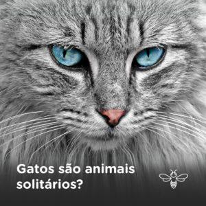 gatos são animais solitarios?