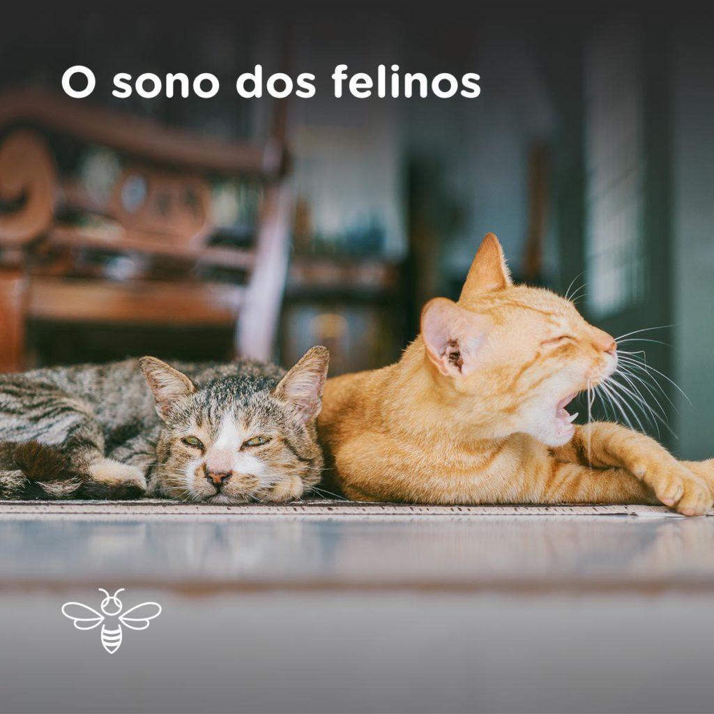 O sono dos felinos
