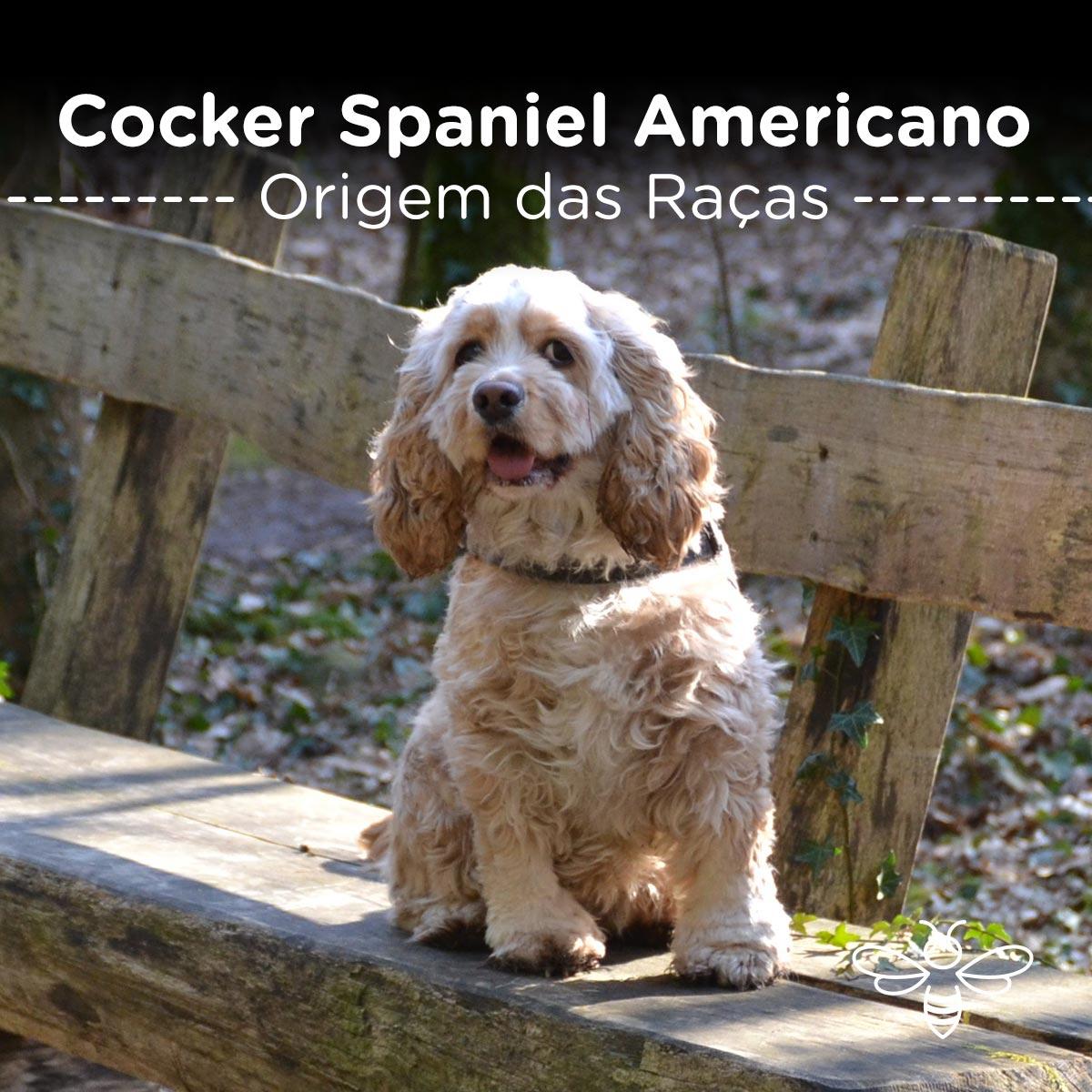 Cocker Spaniel American