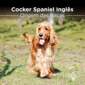 Cocker Spaniel Inglês