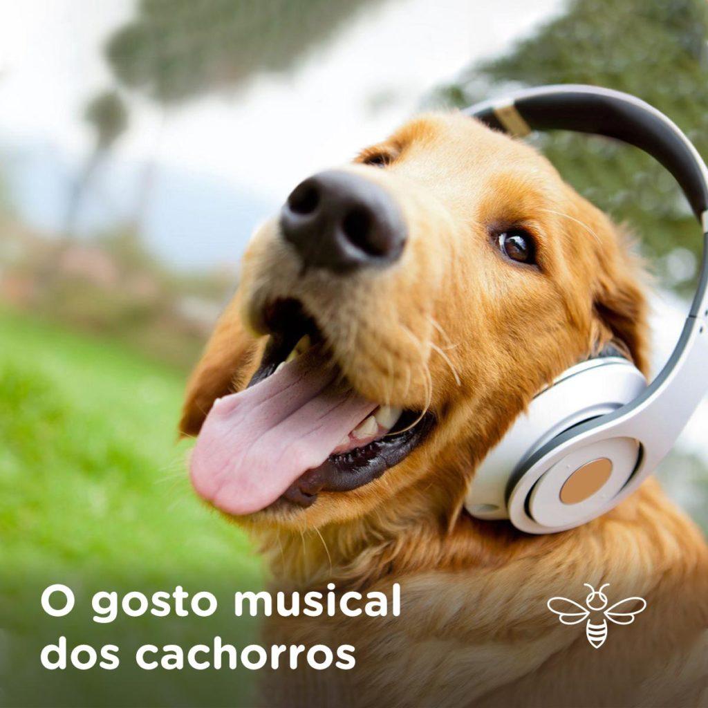 o gosto musical dos cachorros