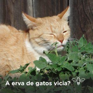 A erva de gatos vicia