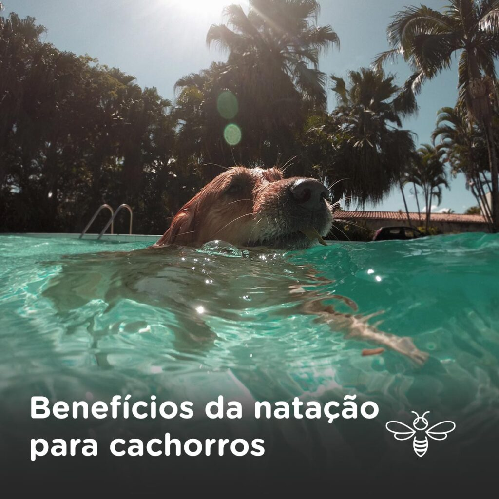Benefícios da natação para cachorros