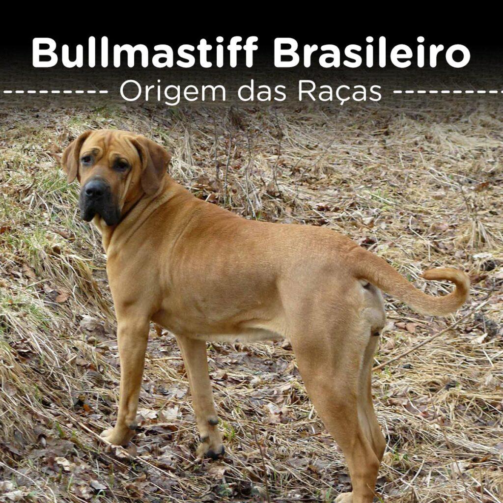 Bullmastiff Brasileiro