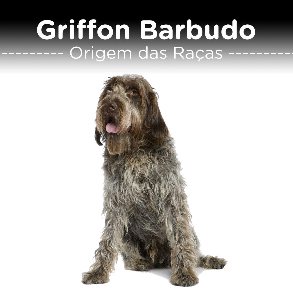 Griffon Barbudo