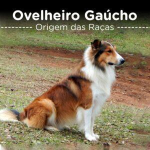 Ovelheiro Gaucho