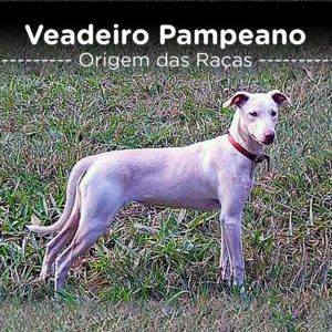 Veadeiro Pampeano