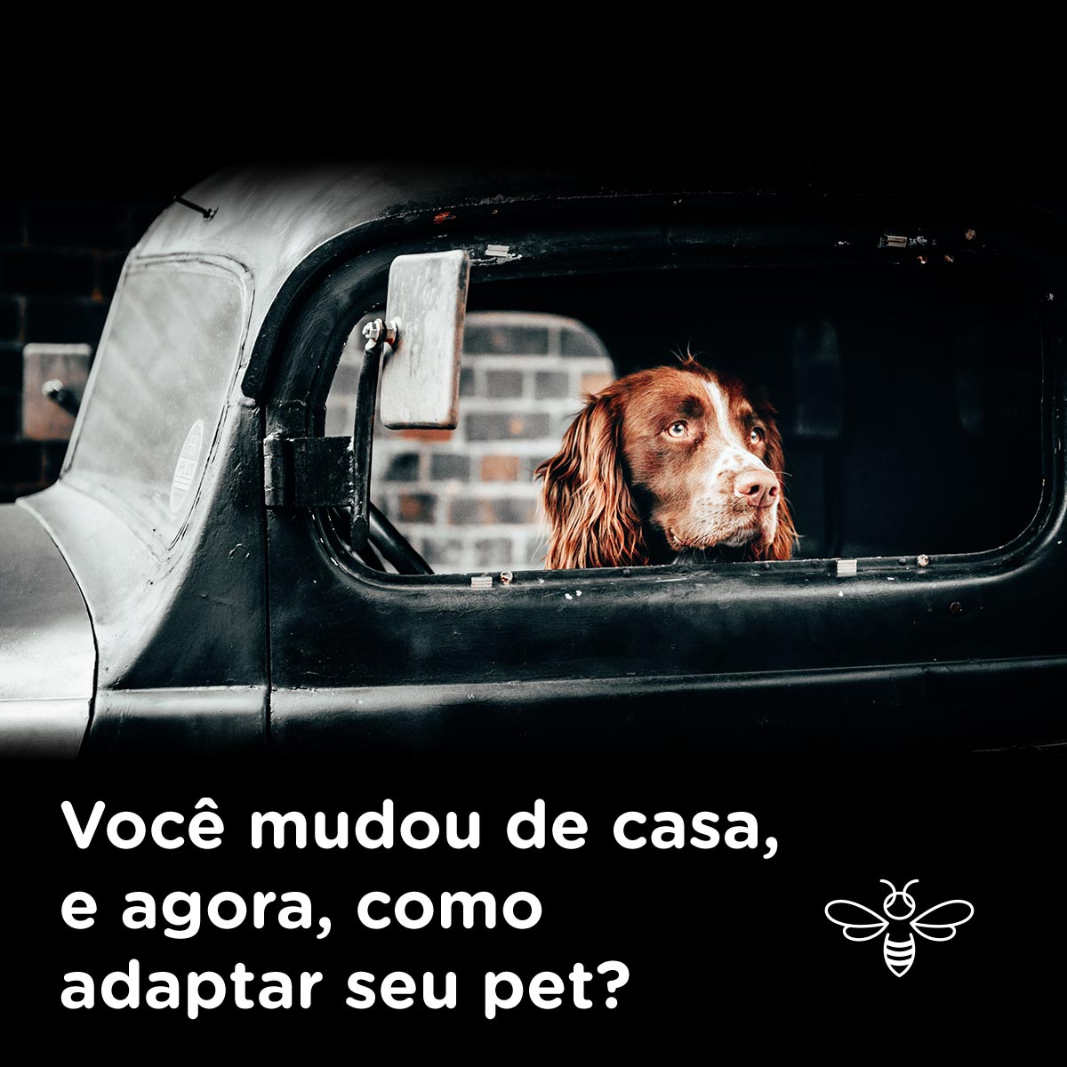 como adaptar seu pet