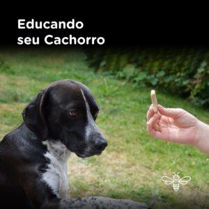 Educando o cachorro