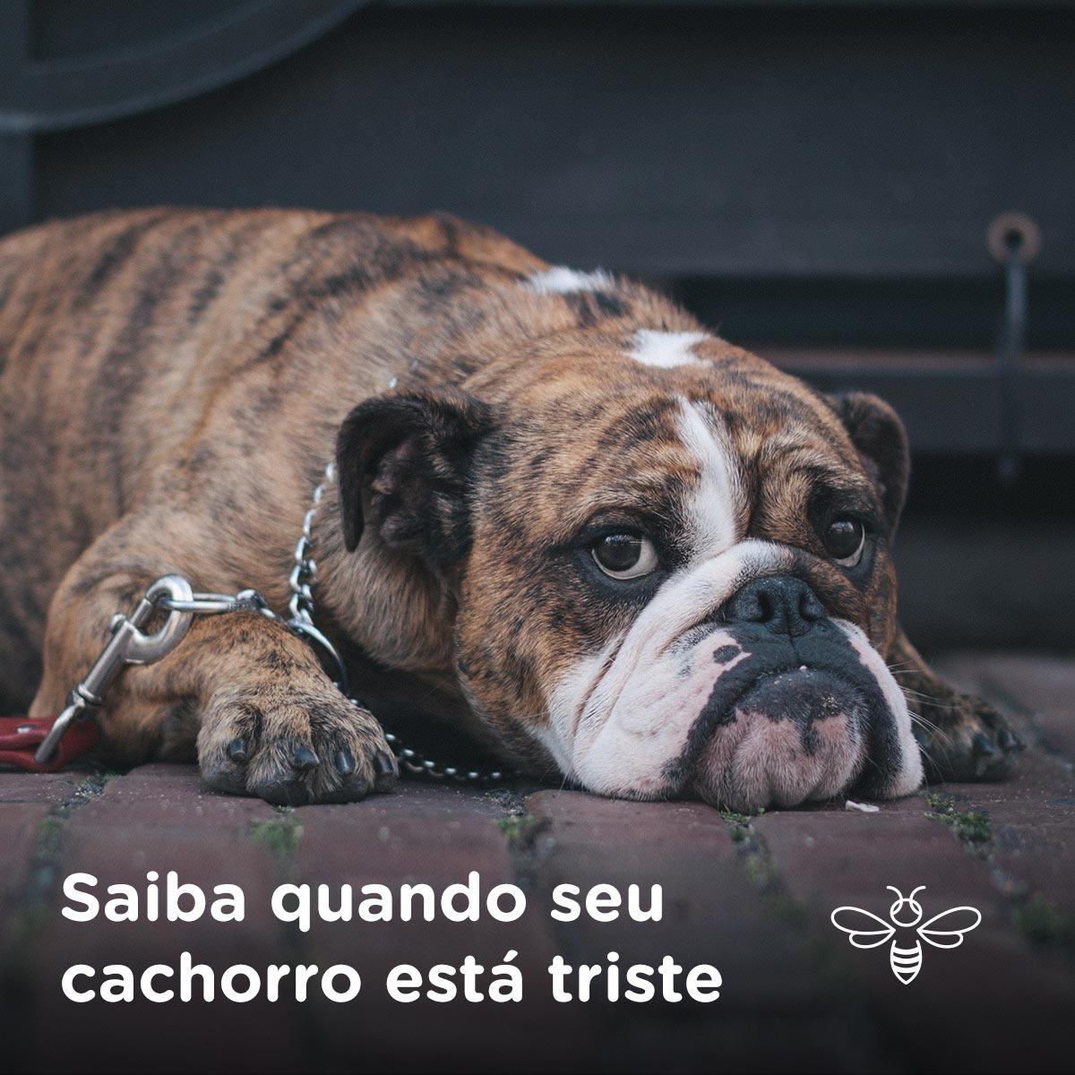 Saiba quando seu cachorro está triste