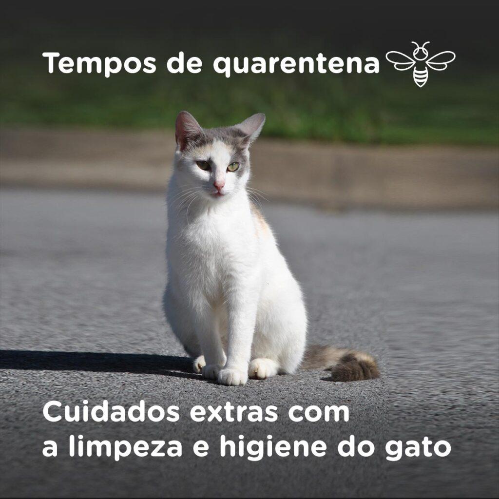 Tempos de quarentena - Cuidados extras com a limpeza e higiene do gato