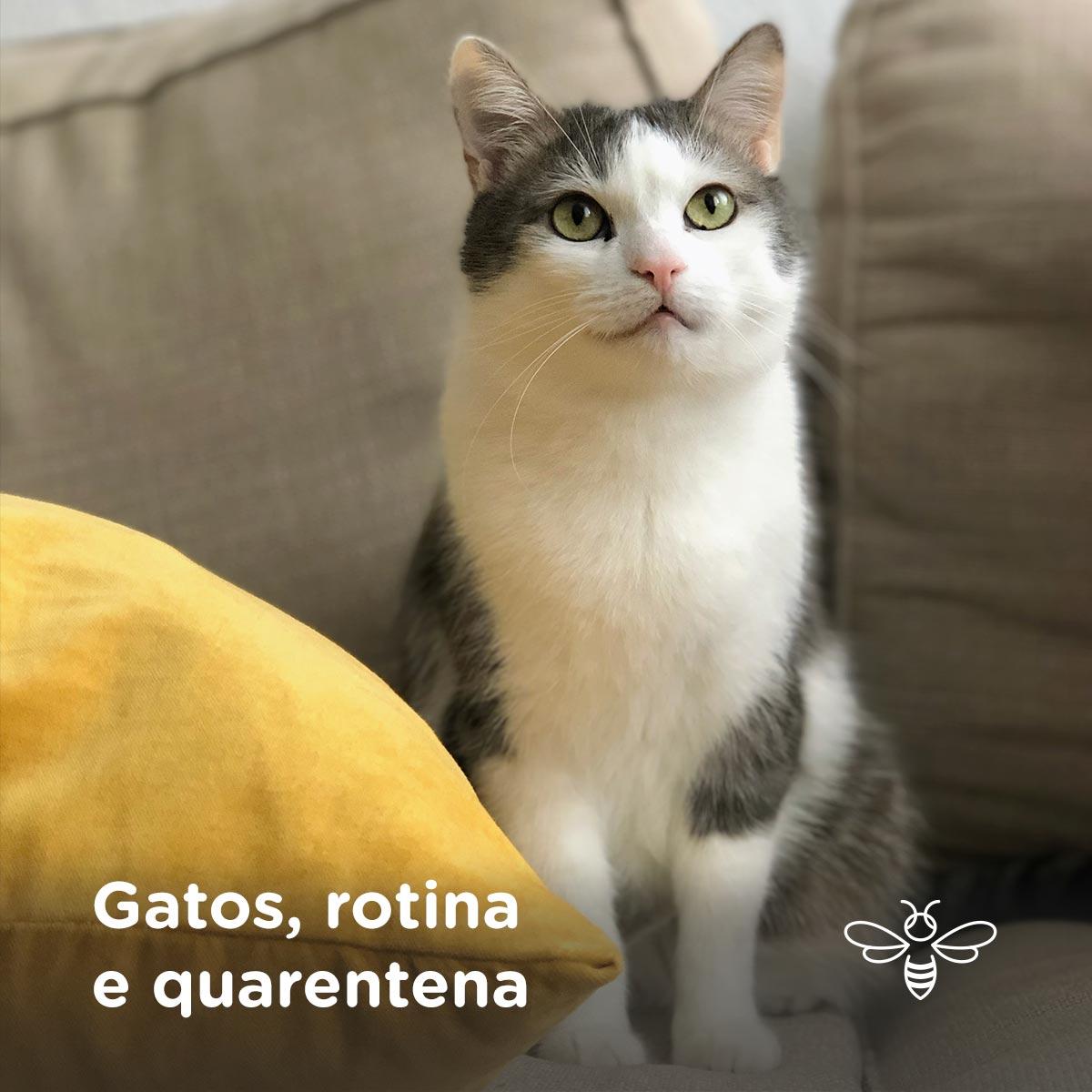 Gatos rotina e quarentena