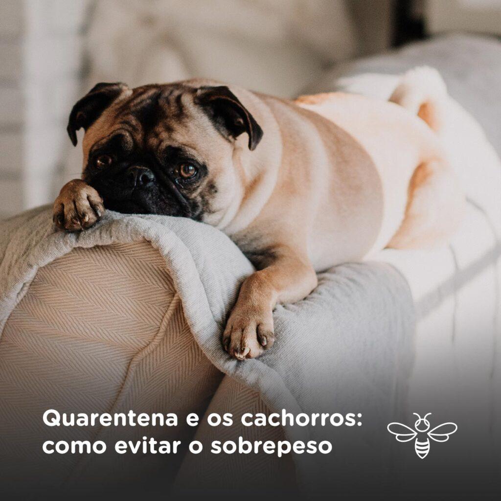 Quarentena e os cachorros: como evitar o sobrepeso