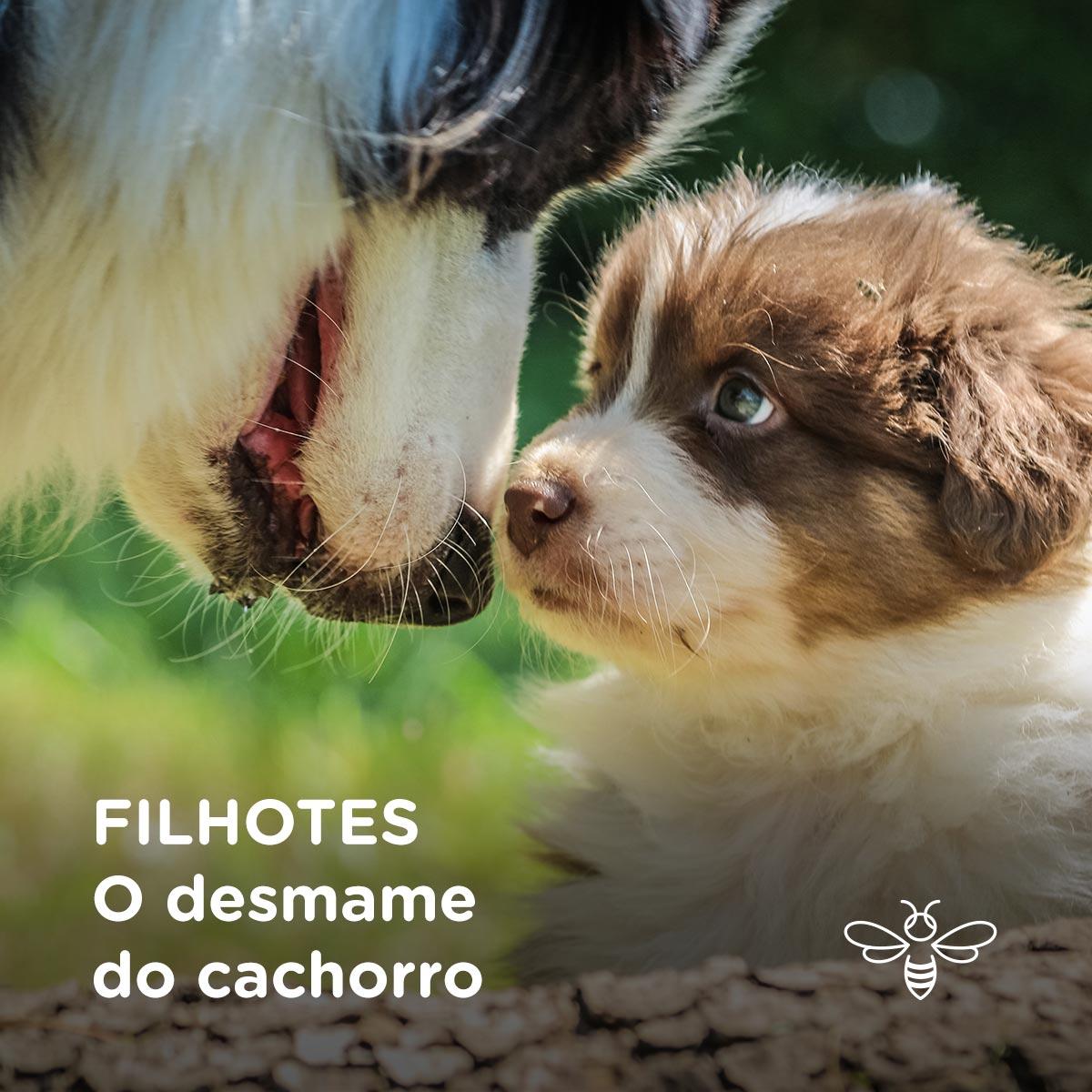FILHOTES O desmame do cachorro