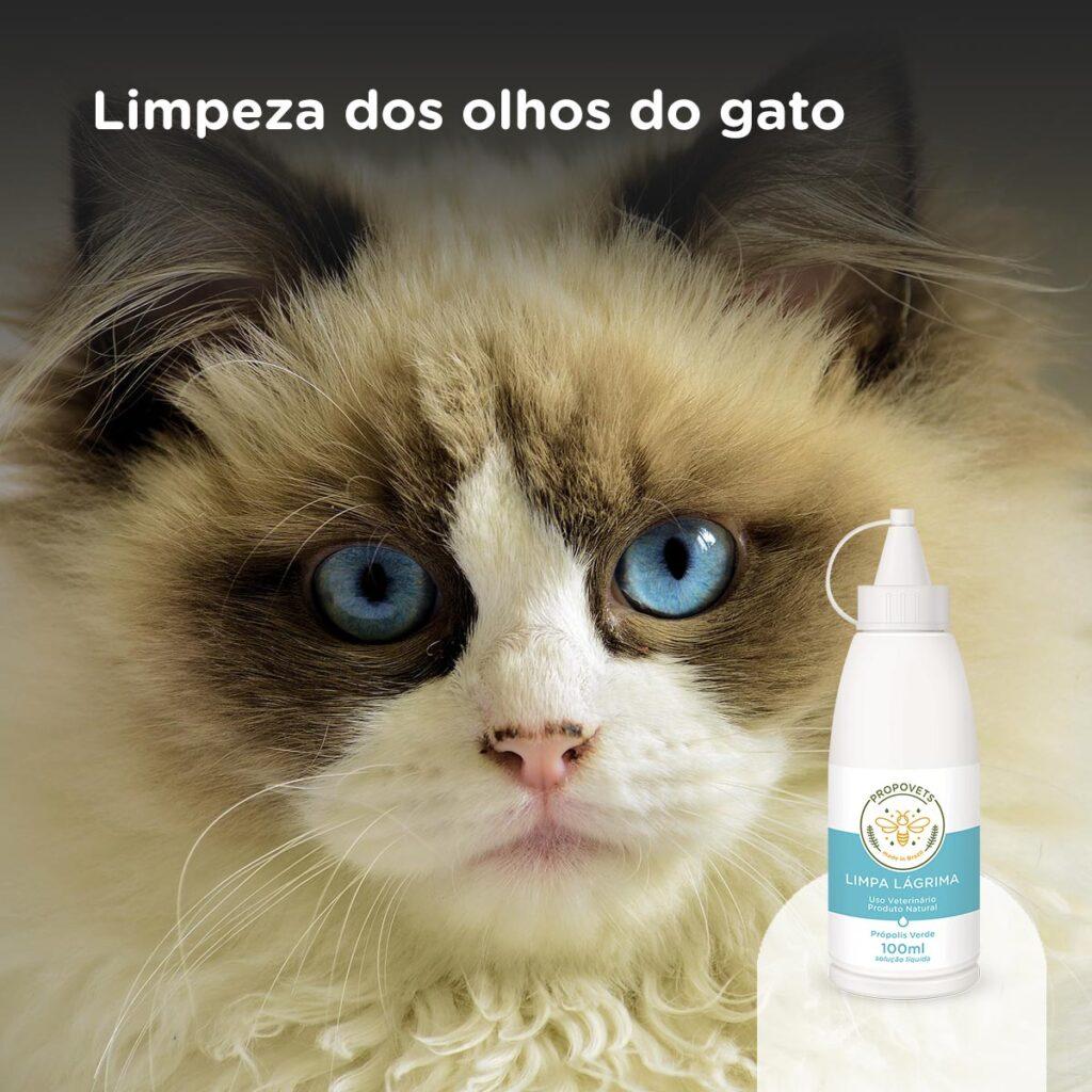 Limpeza dos olhos do gato