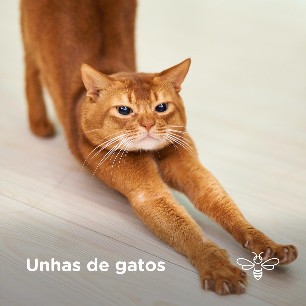 Unhas de gatos