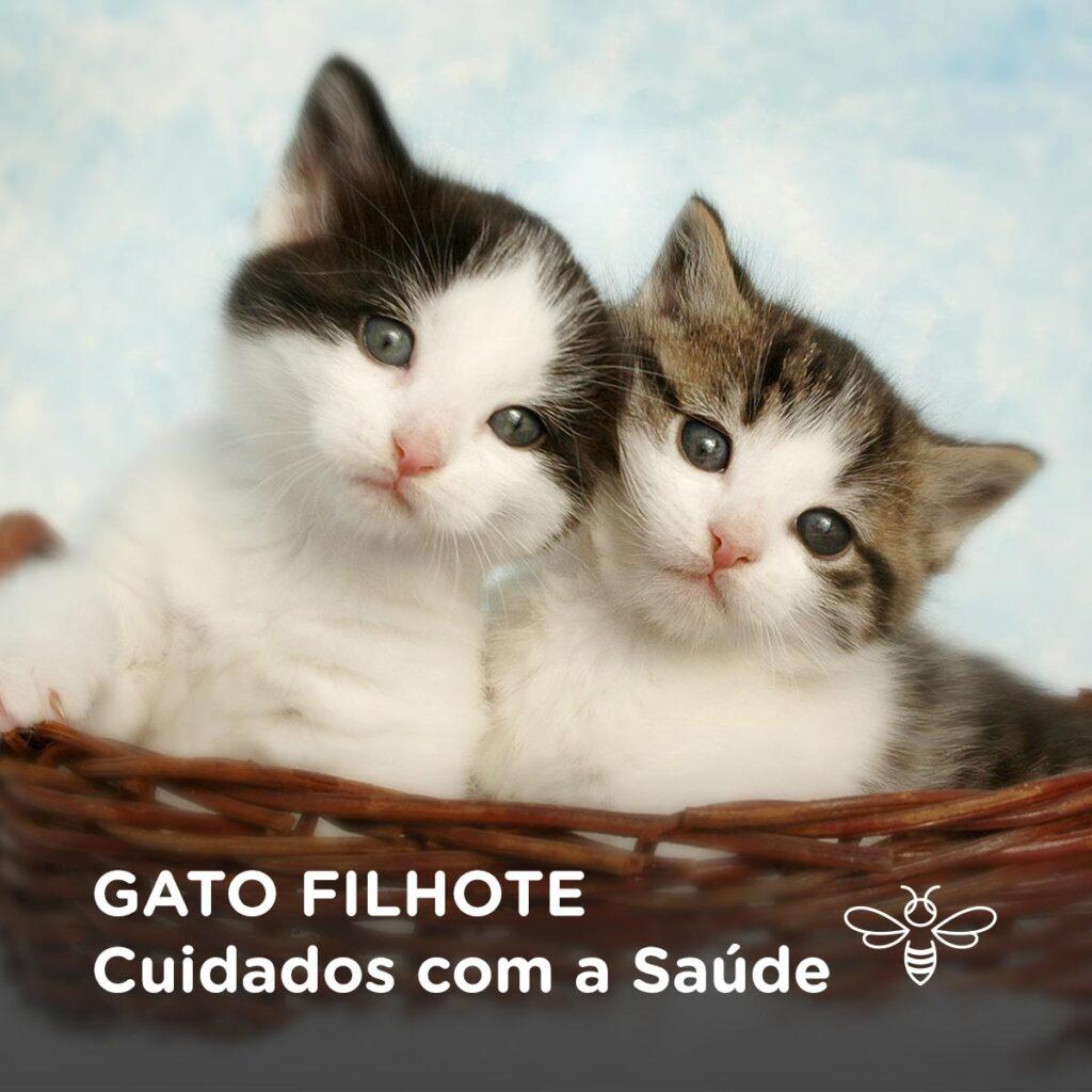 Gato Filhote - Cuidados com a saúde