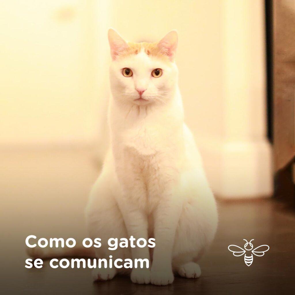Como os gatos se comunicam