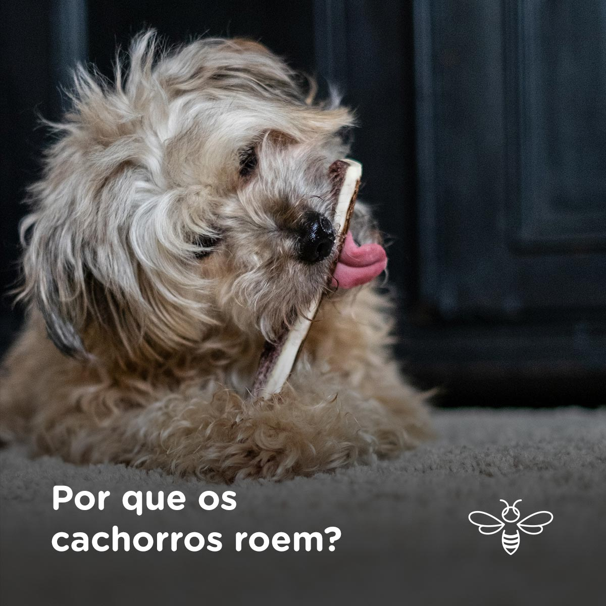 Por que os cachorros roem