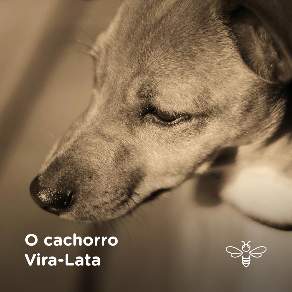 O cachorro Vira-Lata