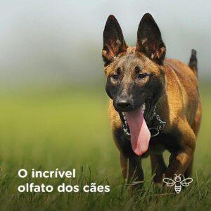 O incrível olfato dos cães