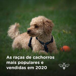 As raças de cachorros mais populares e vendidas em 2020