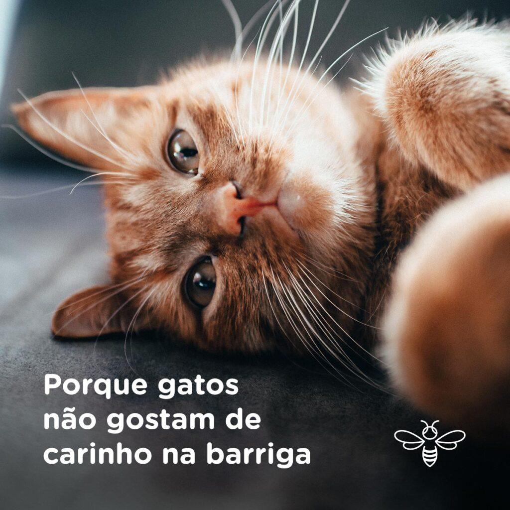 Porque gatos não gostam de carinho na barriga