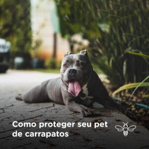 Como proteger seu pet de carrapatos