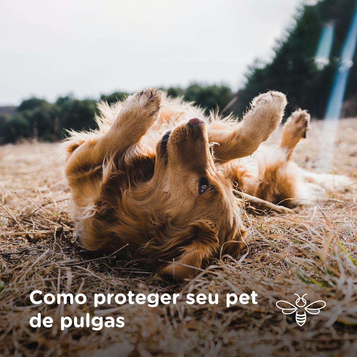 Como proteger seu pet de pulgas