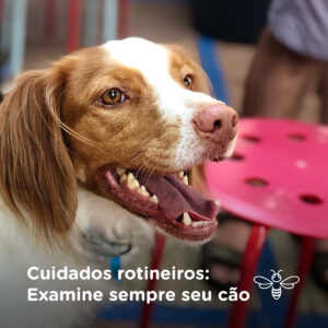 Cuidados rotineiros examine sempre seu cão